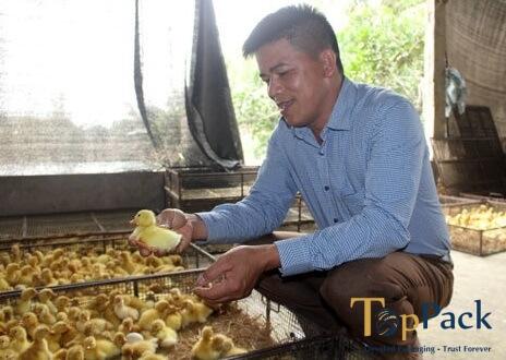 Thu cả nghìn đô mỗi tháng chỉ bằng cách bắt chim câu ấp trứng giả