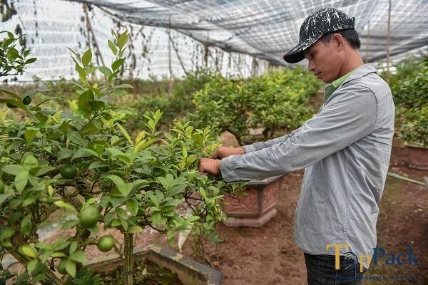 Thành tỷ phú chỉ sau 7 năm làm nông