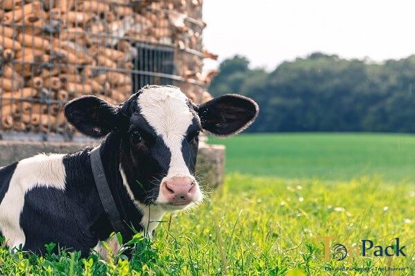 Sản lượng sữa Việt Nam lọt Top châu Á